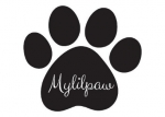Buy Dogs in Bangalore - Mylilpaw