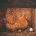 Transformation numérique et stratégie de marque : l'œuf ou la poule?